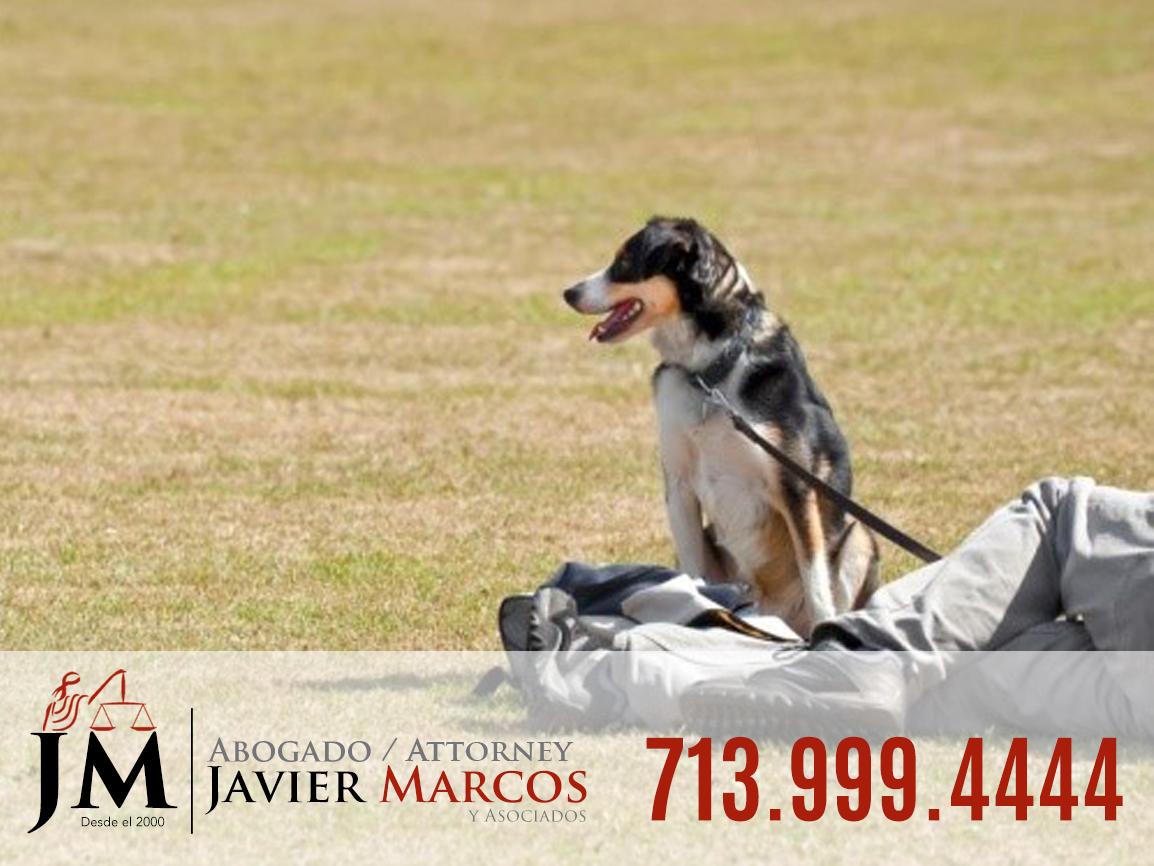 Dog bite attorney   Attorney Javier Marcos   713.999.4444